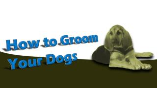 How To Groom Your Dogs