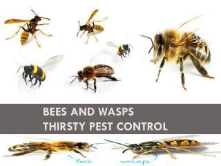 Bees and Wasps Thirsty Pest Control