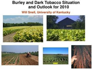 Burley and Dark Tobacco Situation and Outlook for 2010 Will Snell, University of Kentucky