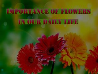 Importance Of Flowers In Our Daily Life