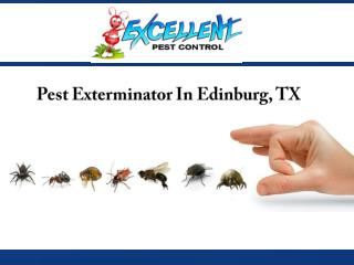 Pest Exterminator In Edinburg, TX
