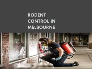 Rodent Control in Melbourne
