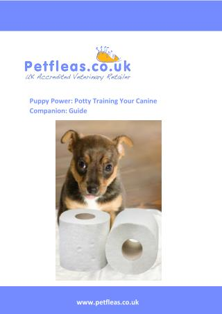 Puppy Power Potty Training Your Canine Companion a Guide