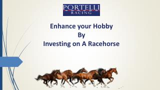 Enhance your Hobby By Investing on A Racehorse