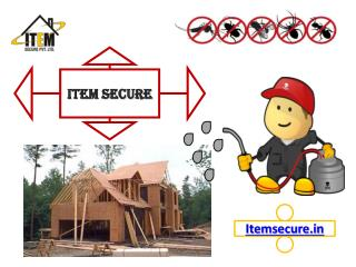 Best Anti-Termite Treatment for Your Home or Building