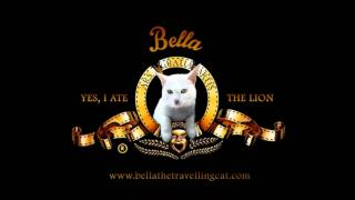 Bella - The Uk Most Travelled Cat