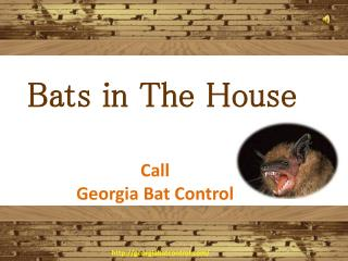 How to Catch a Bat in The House