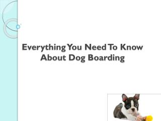 Everything You Need To Know About Dog Boarding