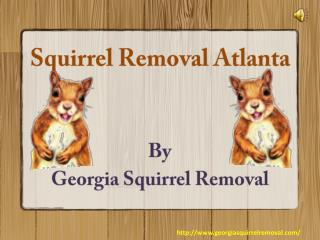 Environment Friendly Methods For Squirrel Removal Atlanta