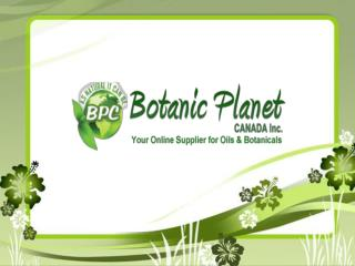 Quality Essential Oils in Canada and USA