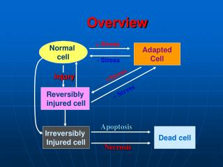 Adapted Cell