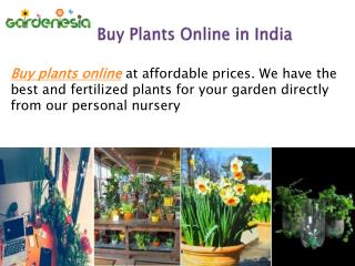 Buy Plants Online in India