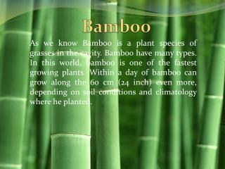 all about bamboo santos