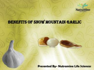 Benefits of Snow Mountain Garlic