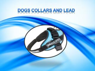 Online Pet Supplies Store – Buy the Best Dog Collars and Leads