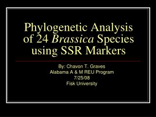 Phylogenetic Analysis of 24  Brassica  Species using SSR Markers