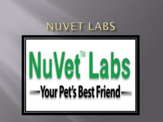 NuVet Reviews|Pets Welcome: Hotel Pet-iquette for Traveling with Your Dog