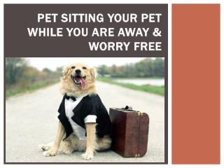 Pet Sitting your pet while you are away & worry free