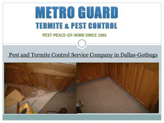 Pest and Termite Control Service Company in Dallas-Gotbugs