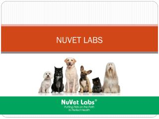 NuVet Labs | Signs Your Dog is Eating Too Much