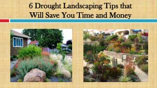 6 Drought Landscaping Tips that Will Save You Time and Money