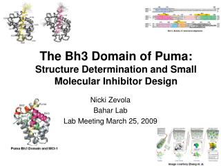 The Bh3 Domain of Puma: Structure Determination and Small Molecular Inhibitor Design