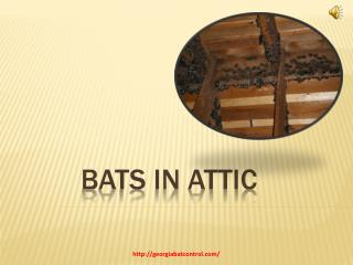 How To Get Rid of Bats in the Attic