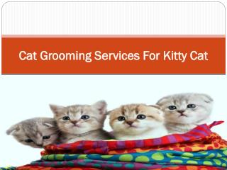 Cat Grooming Services For Kitty Cat
