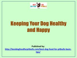 Best Dog Food For Pit Bulls:Keeping Your Dog Healthy And Happy