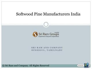 Softwood Pine Manufacturers India
