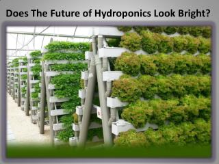 Does The Future of Hydroponics Look Bright?