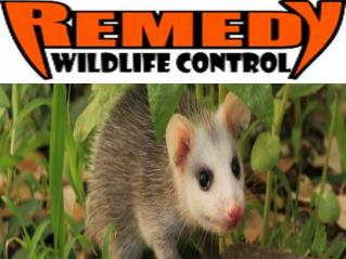 How to Trap Wildlife Animals in Florida