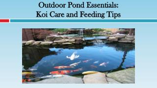 Outdoor Pond Essentials: Koi Care and Feeding Tips