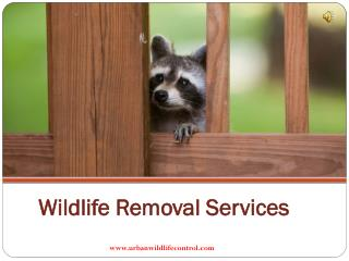 Why We Need Wildlife Removal Services