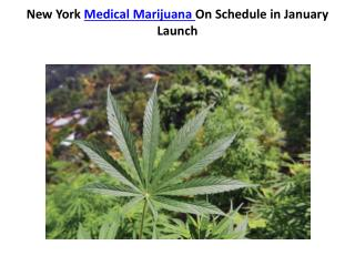 New York Medical Marijuana On Schedule in January Launch