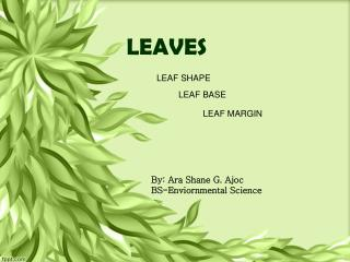 DENDROLOGY-LEAVES
