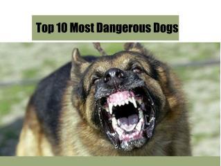 Top 10 Most Dangerous Dogs