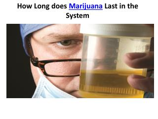 How long does marijuana last in the system