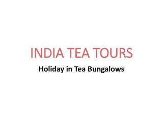 Tea tours in India