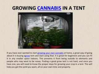 Instructions On Growing A Cannabis Crop In A Tent