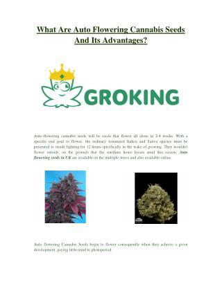 Auto flowering seeds groking