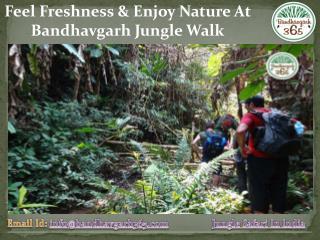 Feel Freshness & Enjoy Nature At Bandhavgarh Jungle Walk
