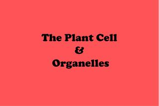 The Plant Cell  &  Organelles