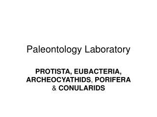 Paleontology Laboratory