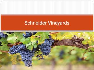 Schneider Vineyards