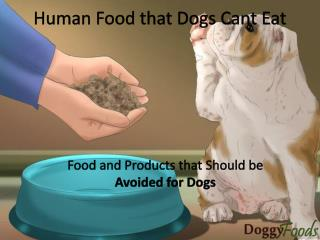 Food That Should Be Avoided For Dogs- List of Food With Their Harmful Impact on Dogs