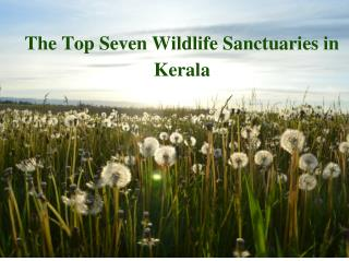Top Seven Wildlife Sanctuaries in Kerala