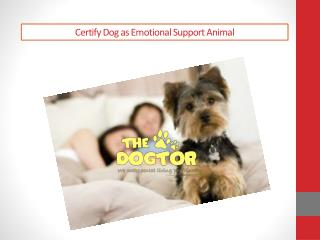 Certify dog as emotional support animal