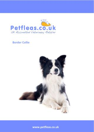 Dog Breeds: The Border Collie