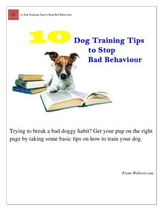 10 Dog Training Tips to Stop Bad Behaviour